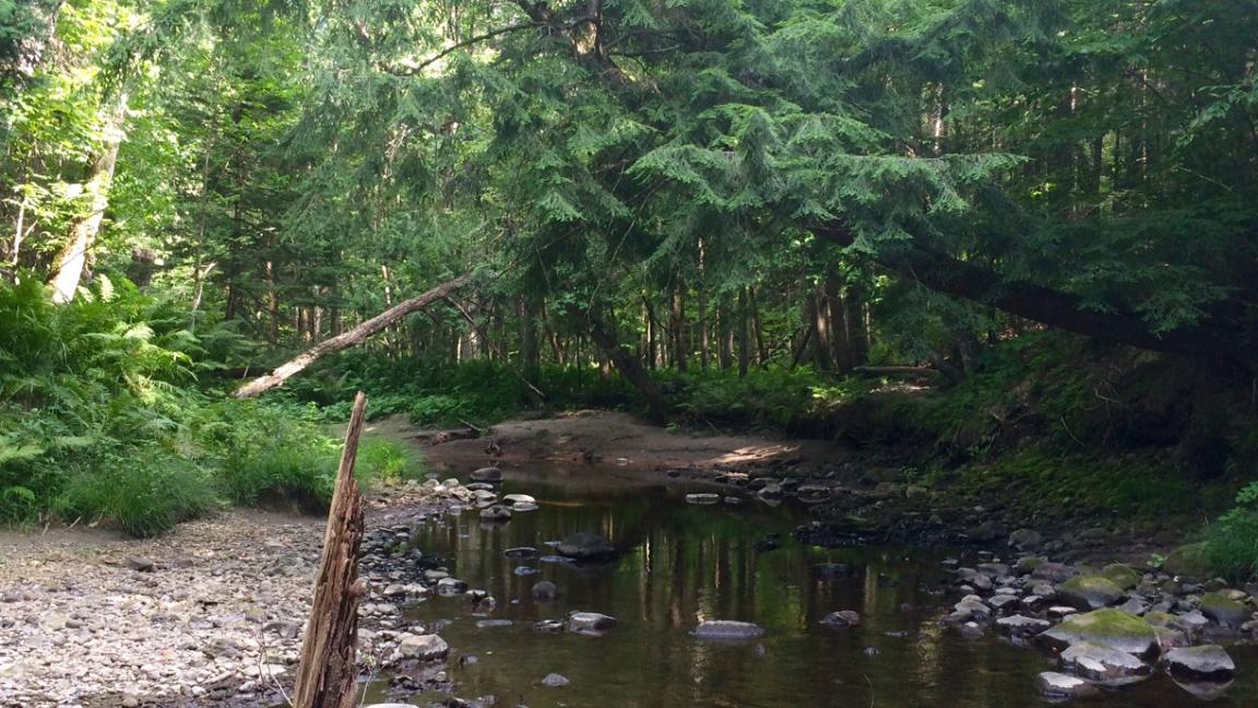 Randonnée à la rivière aux Ormes