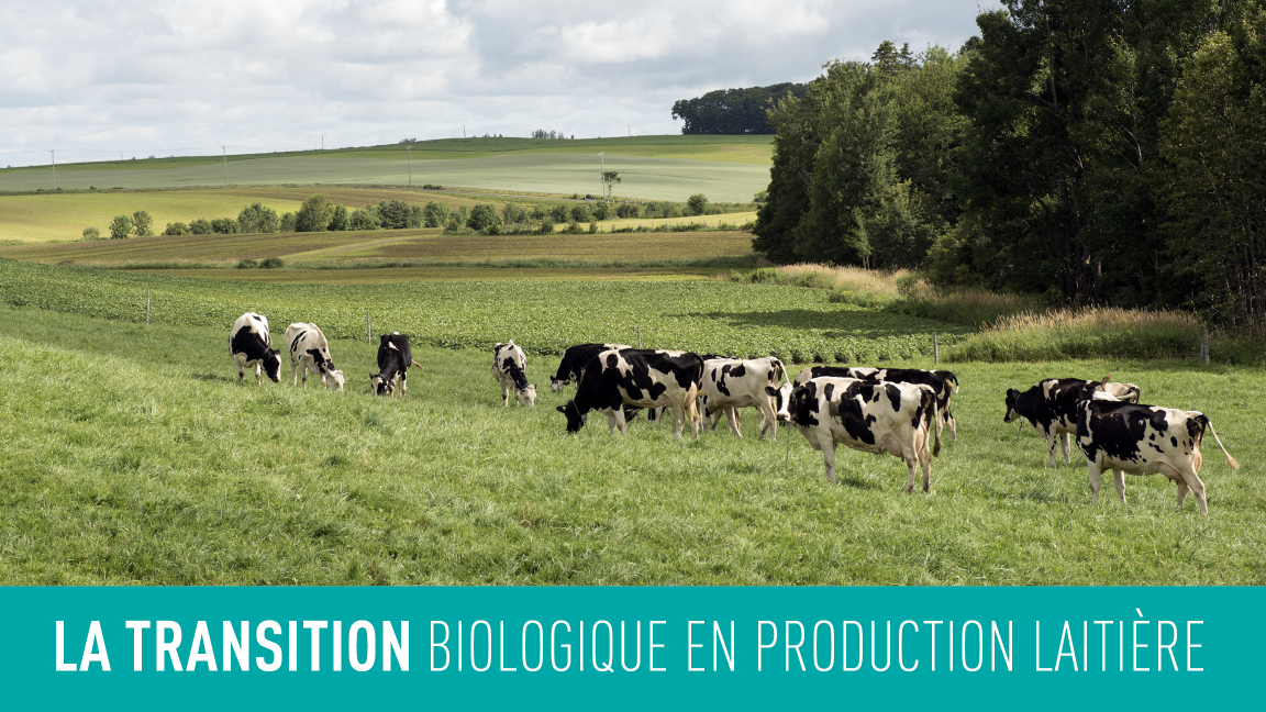 Annulé : La transition biologique en production laitière est-ce pour moi?
