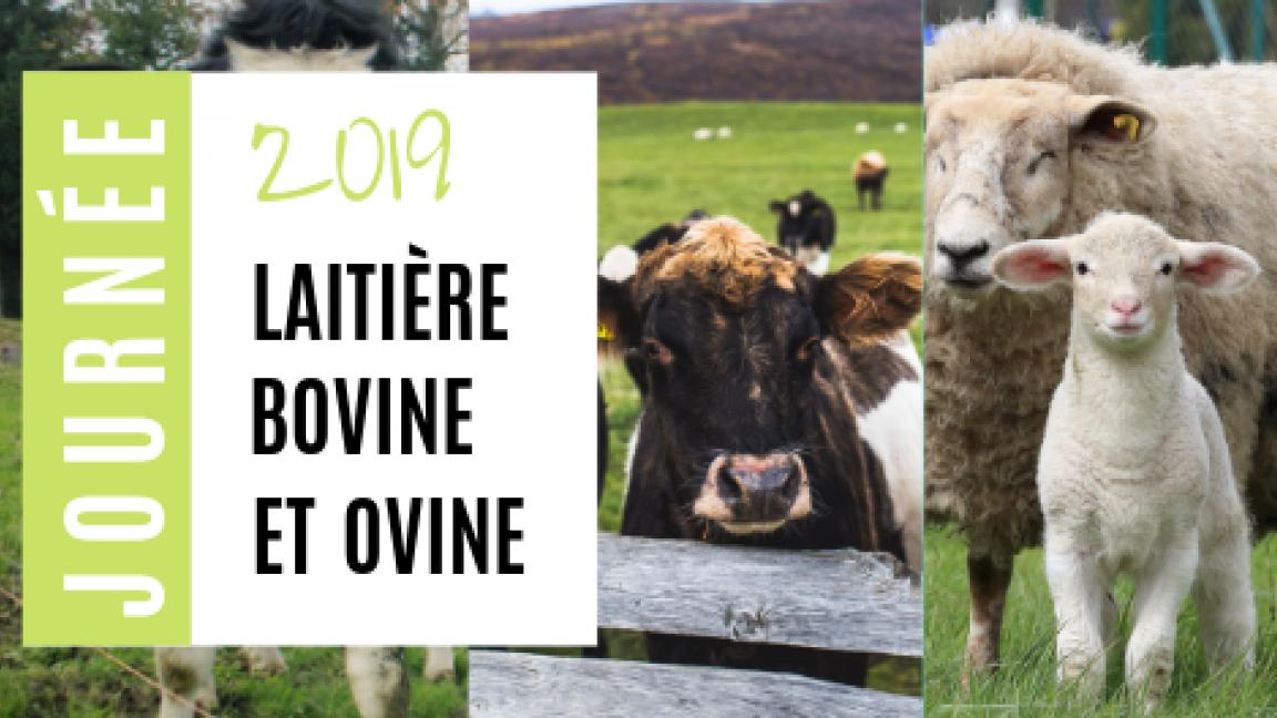 Journée laitière, bovine et ovine 2019