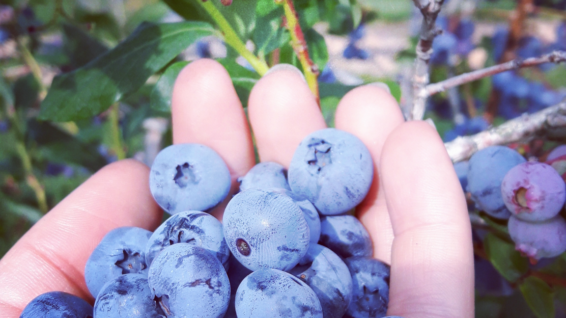 Head to the country for a gourmet tour, from an organic blueberry farm to an organic orchard!