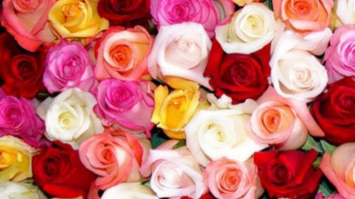 La rose par Élodie Fleuriste