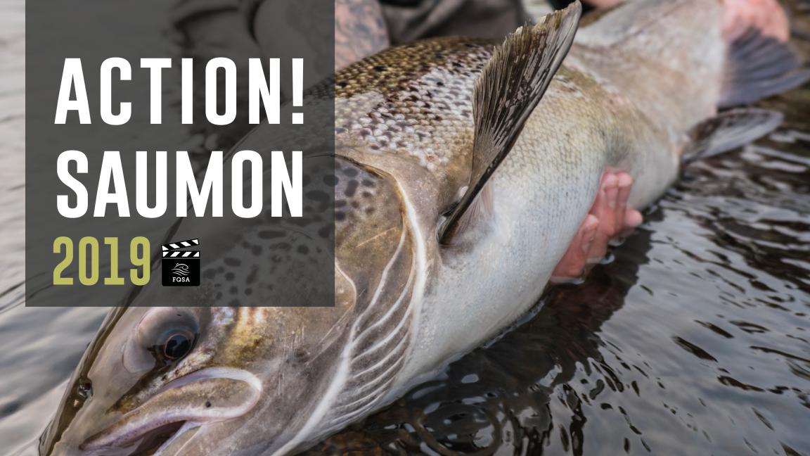 Action! Saumon - Québec