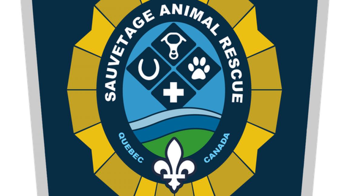 Premiers secours pour animaux