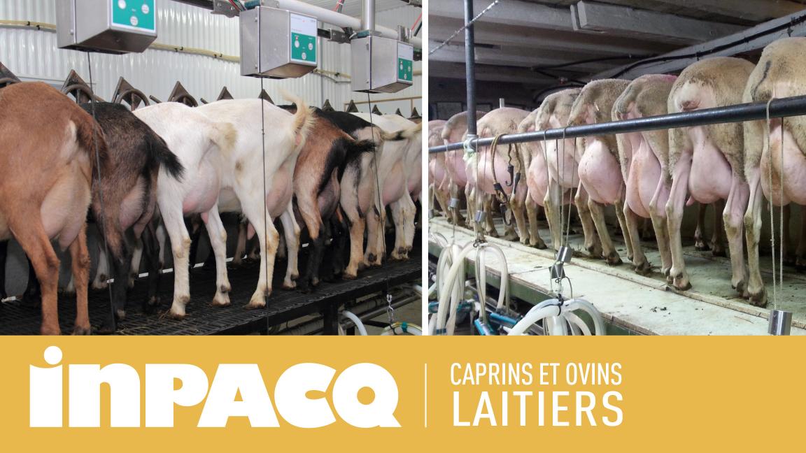 Journée INPACQ Caprins et Ovins laitiers