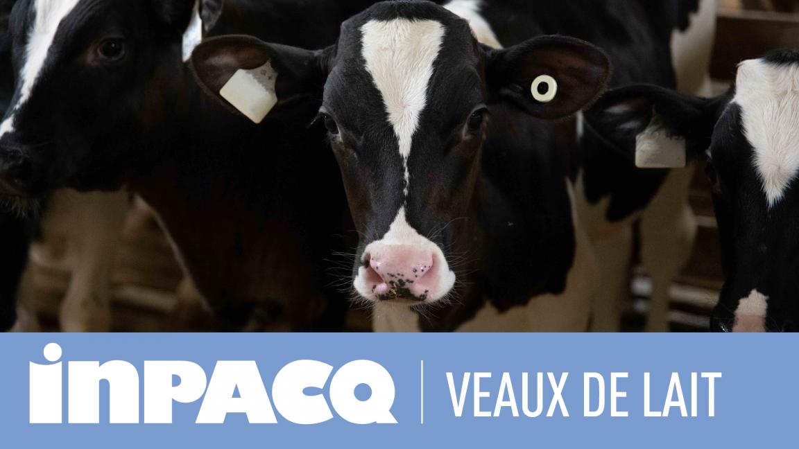 INPACQ Veaux de lait