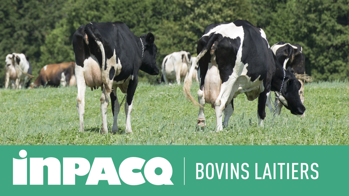 INPACQ Bovins laitiers
