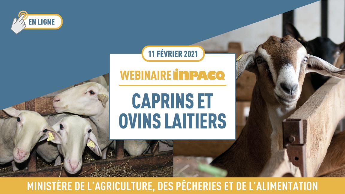 Webinaire INPACQ Caprins et ovins laitiers