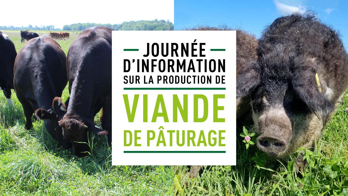 Journée d'information sur la production de viande de pâturage