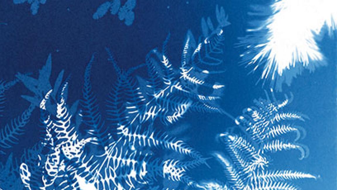 Cyanotype en herbe!