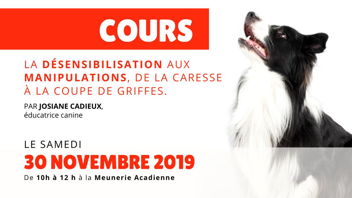 Cours canin avec chien : Désensibilisation aux manipulations