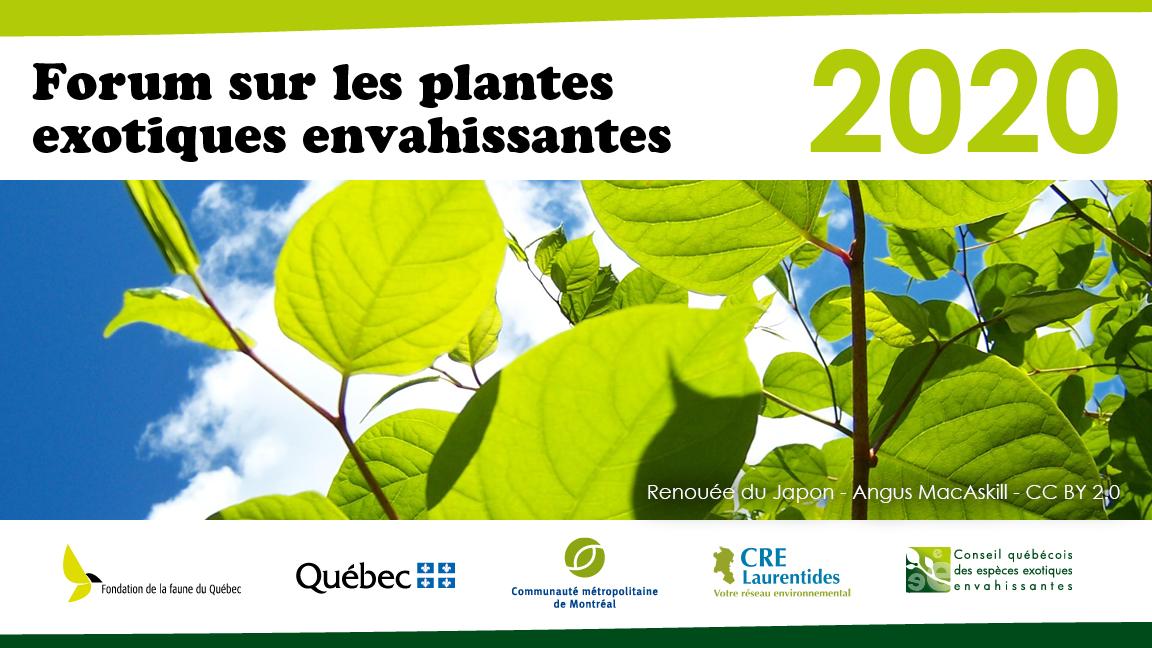 Plantes exotiques envahissantes au Québec : gestion, succès et perspectives
