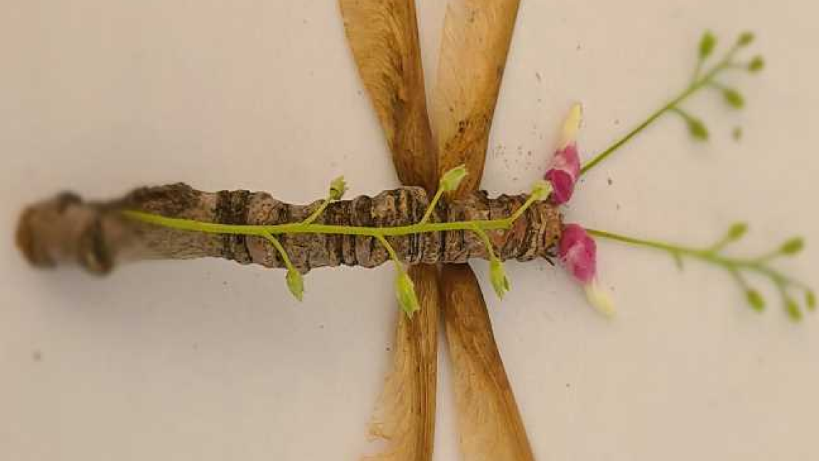 Création d'insectes végétaux