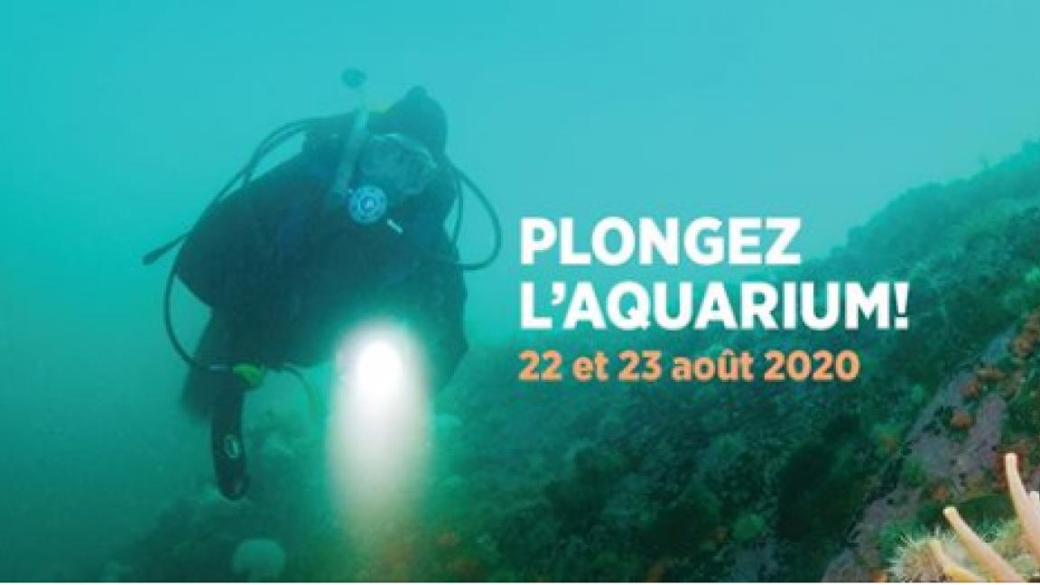 Plongeur d'un jour - 22 août 2020 - AM