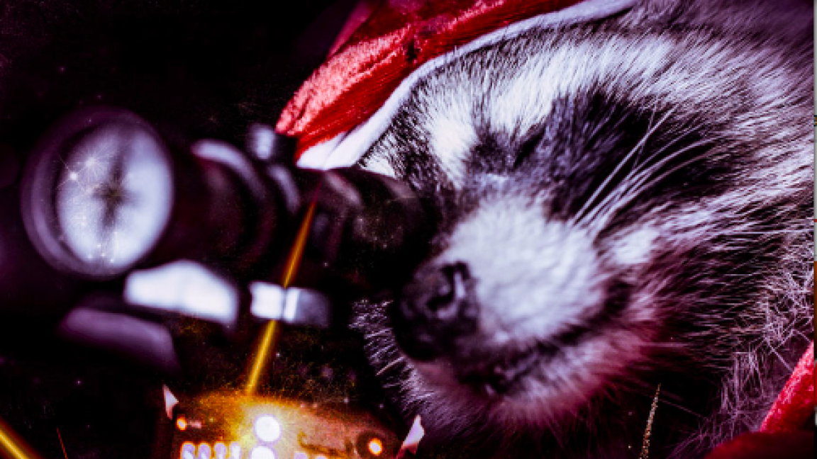 Killer Raccoons! 2! : Dark Christmas in the Dark
