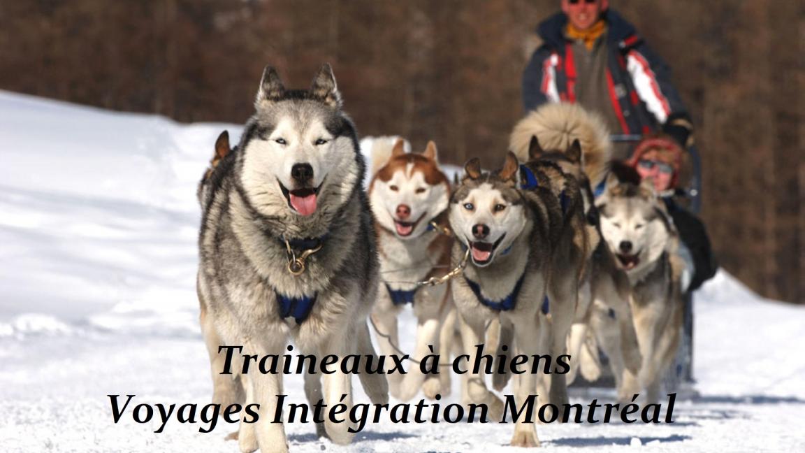Journée traîneau à chiens et resto historique! (3 mars)